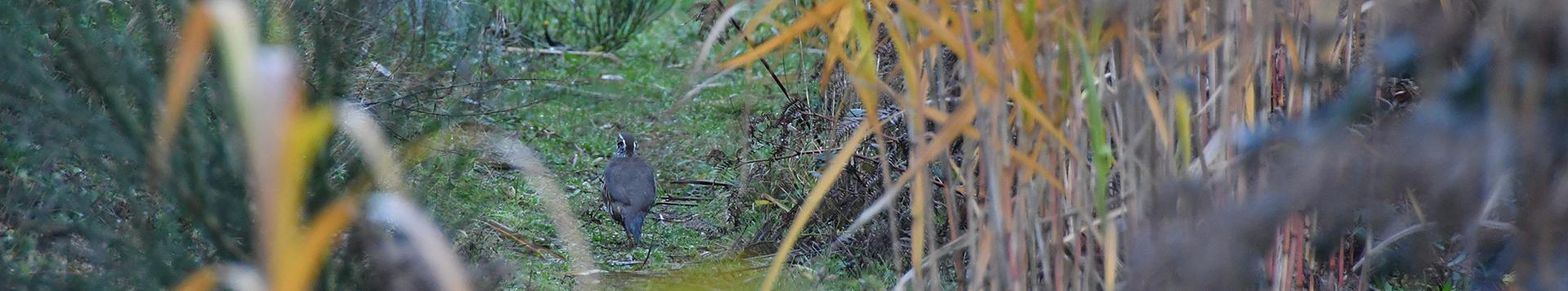 Tarifs chasse - Domaine des Enfreins